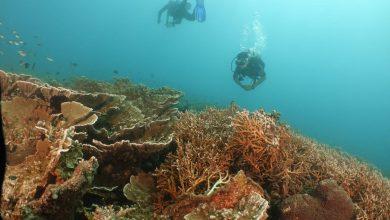 BPPD Lombok Timur Identifikasi Destinasi Wisata Bahari